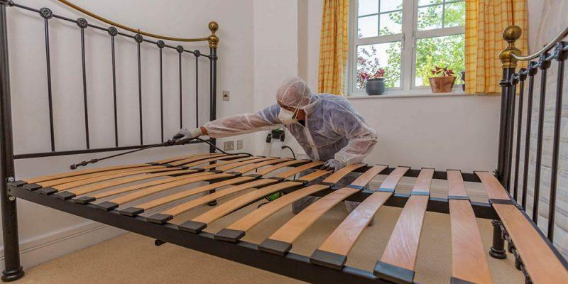 How to isolate bedbugs